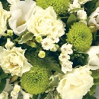 Posy  Green and White