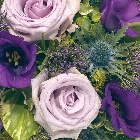 Posy  Purple,Blue and Lilac